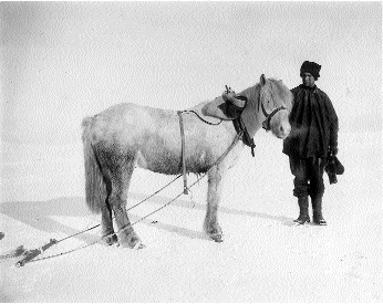 With his pony, 'Bones', on the same expedition. (Scott Polar Research Institute, Cambridge)
