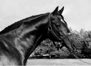 Above: The racehorse Nasrullah, which in 1950, the year after the IDA was established, realised 20% of Ireland's overseas earnings when exported to North America. (Claiborne Farm)