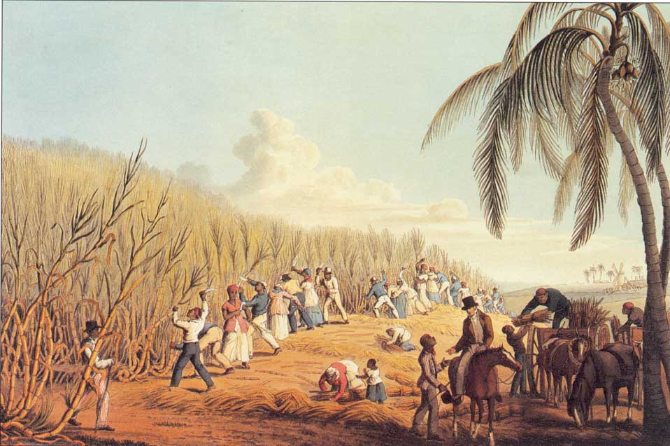 Black slaves cutting sugar cane on a plantation established by the Delaps of Donegal, from Ten views of the island of Antigua by William Clarke, 1823. (British Library)